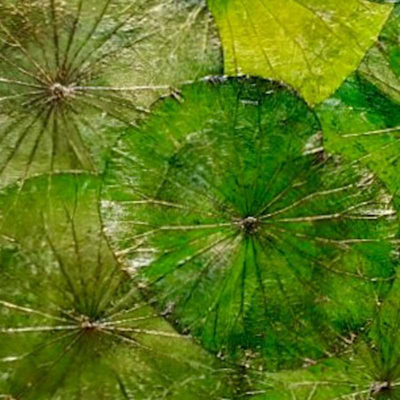 Lotus Leaf Wall Art (21)