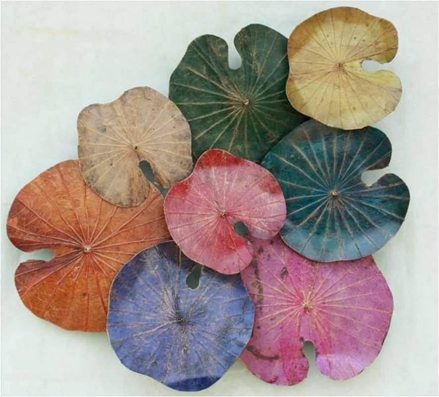 Lotus Leaf Wall Art (49)